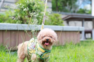 Protect your sensitive data from the POODLE vulnerability