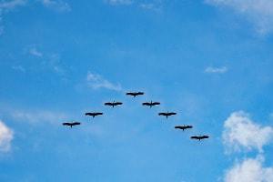 Migration dans le nuage   VPS Canada